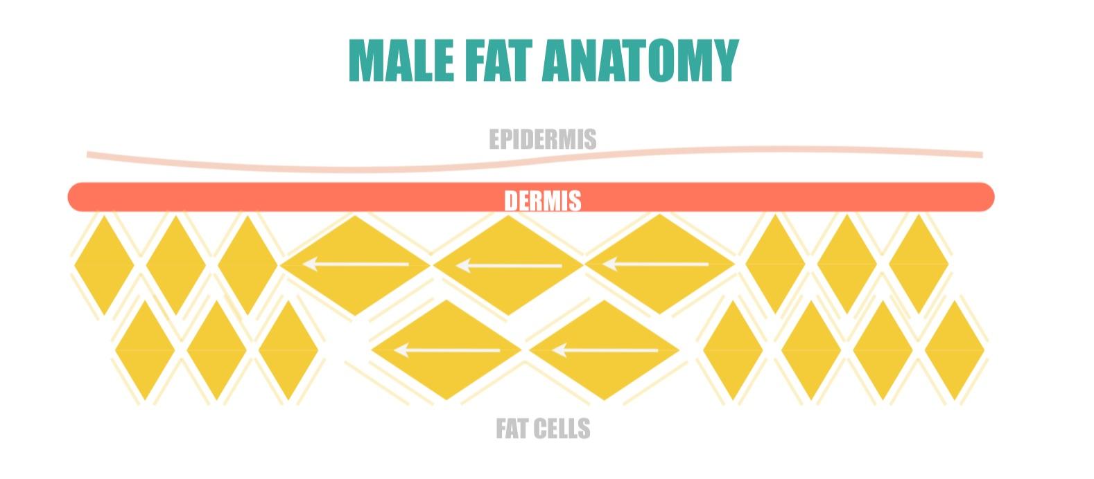 Male Fat Anatomy | simplerootswellness.com