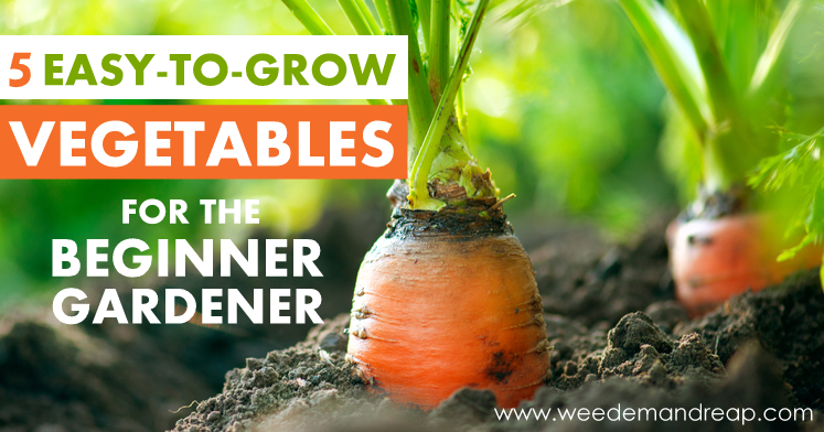 Fun finds from Simple Roots | simplerootswellness.com. Carrot Growing Closeup