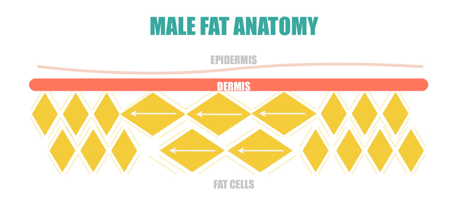 Male Fat Anatomy | simplerootswellness.com