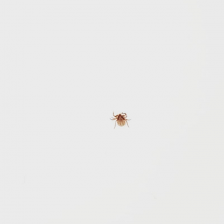 Natural Tick Repellent + Healing From Lyme Disease | simplerootswellness.com #podcast #tickrepellent #lymedisease #health