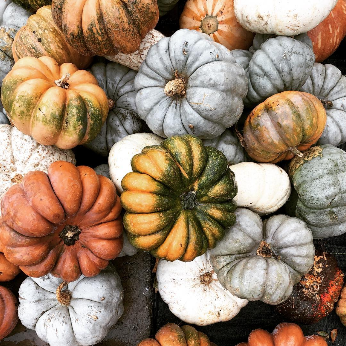 A Seasonal Guide for Fall & Winter: What to Eat & How to Live | simplerootswellness.com #podcast #seasonality #fallfood #healthtip